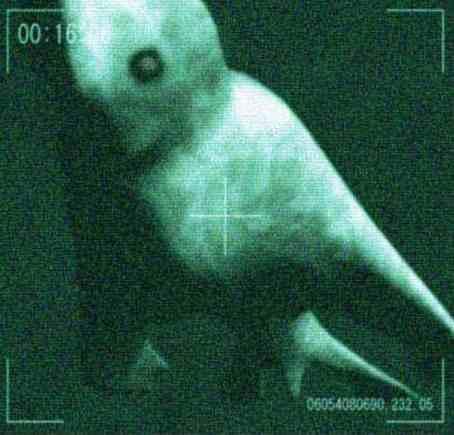 Нинген: Чудовищните русалки на Япония ( видео)