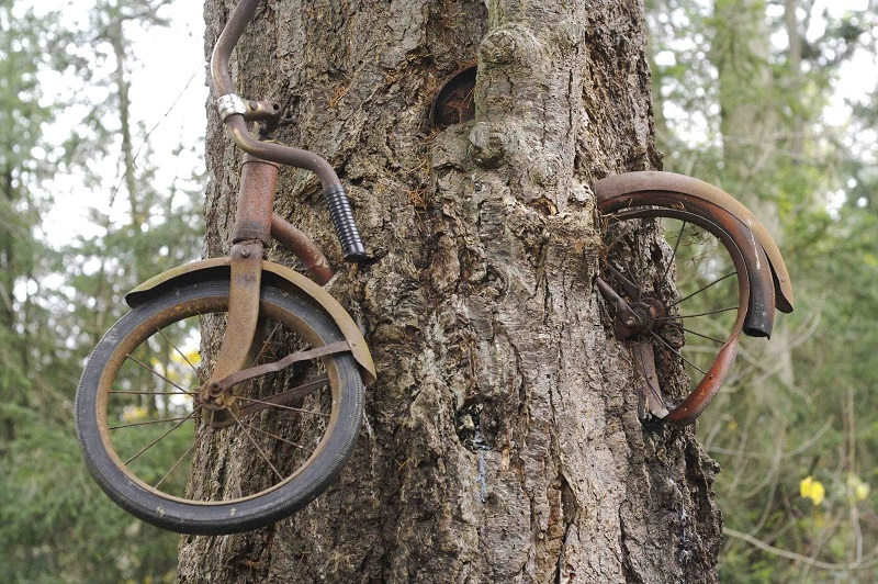 дърво поглъща колело