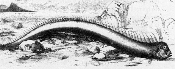 морски змей