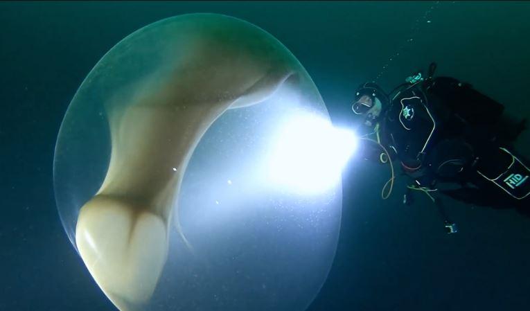 Екип от водолази изследователи се сблъскват с огромен мехур наподобяващ яйце на извънземно в океанските дълбини (видео)