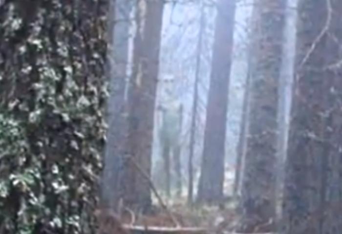 Туристи случайно заснеха извънземен в гора в България