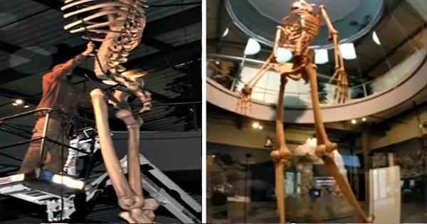 Откриха в Еквадор скелети на древни гиганти които са 7 пъти по-големи от на съвремения човек