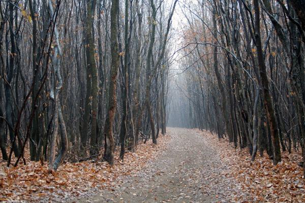 Гора Хоя Бачу (Румъния)